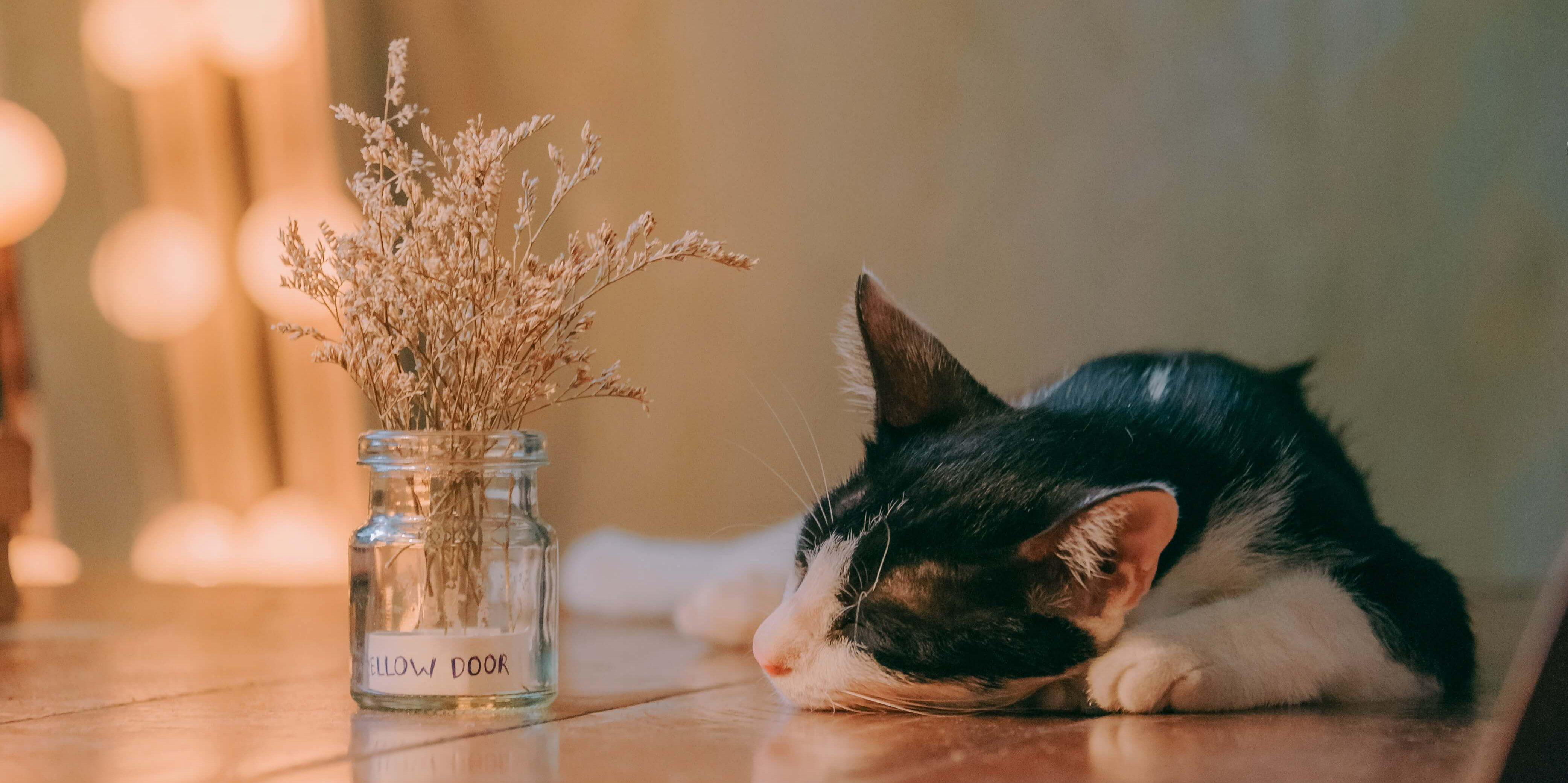 close-up-photo-of-laying-cat-1444492 (1)